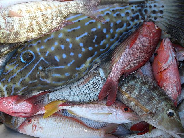 カラフルな熱帯魚たち