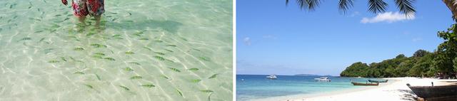 透き通る海に熱帯魚がたくさん