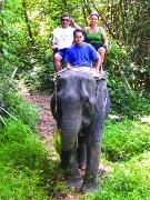 愛くるしい目の象たち