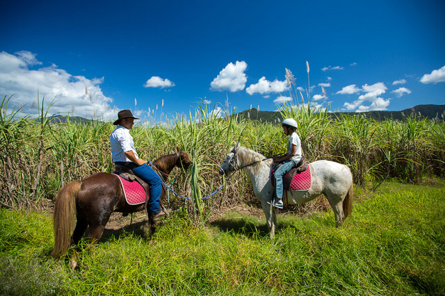 自然の中で乗馬を楽しめます