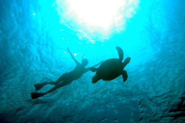 海の守り神ウミガメ先生と一緒に