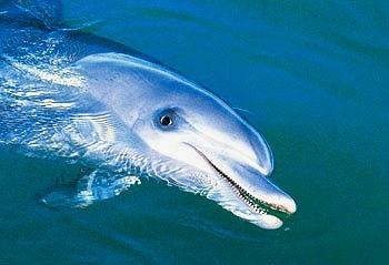 イルカに御挨拶