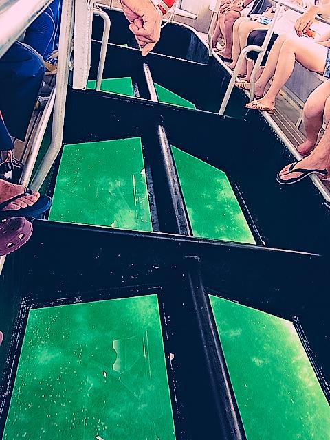 グラスボトムボートから海を覗き込む