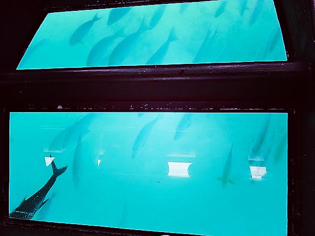 魚の群れが船の下を通った!