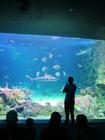 シドニー水族館