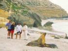 カンガルー島サウスコースト 1日4WDツアー フリンダースチェイスとシールベイ付き