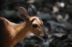 アンコール遺跡と自然動物保護区を見よう!!