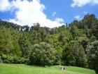 カウリの巨木とワイナリー巡り!トレッキング&ワイナリーツアー