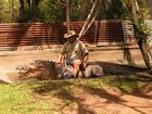 パームコーブ発世界遺産ウールヌーラン国立公園と熱帯雨林