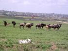 ナイロビ国立公園半日観光