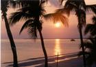 メキシコ湾サンセット・クルージング&イルカ・ウオッチング