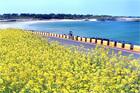 済州島ウェルビーイングコース