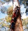 アルバニー、エスペランス、ウェーブロック&グレイトサザン 西オーストラリア南部6日間