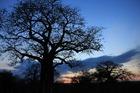 動物の楽園タンザニアプライベートサファリ7泊8日の旅-マニヤラ湖・セレンゲティ・ンゴロンゴロ・タランギーレ(キリマンジャロ空港送迎可)