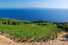 ワイナリー巡り&ストンを訪れるペリェシャツ半島1日ツアー【6月~10月】