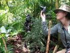 野生のゴリラが見られる!2泊3日ウガンダサファリツアー【カンパラ市内発着】