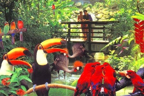 鳥たちの楽園ジュロンバードバーク【選べる ランチなし/ランチ付】