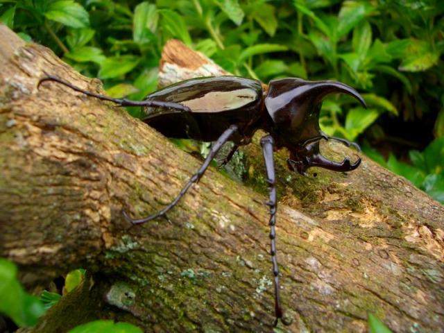 ボルネオ昆虫採集体験と蝶園ツアー
