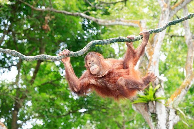 シンガポール動物園! 動物大好き! みんなで行っちゃおう