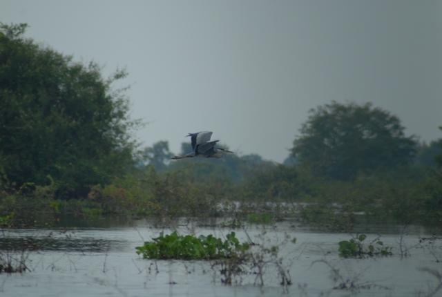 プレックトアール鳥獣保護区でクルーズと野鳥観察