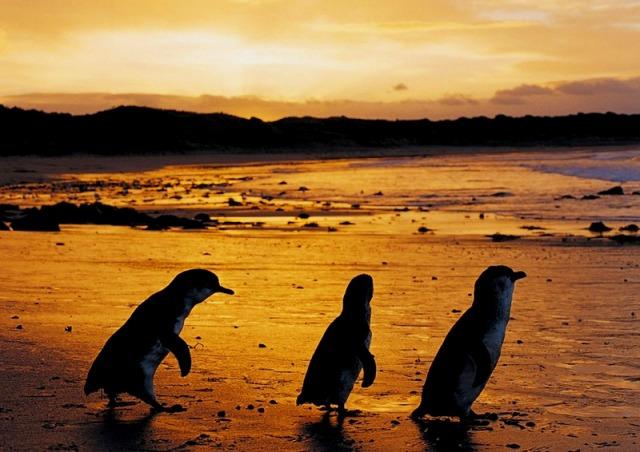 格安ペンギンパレード