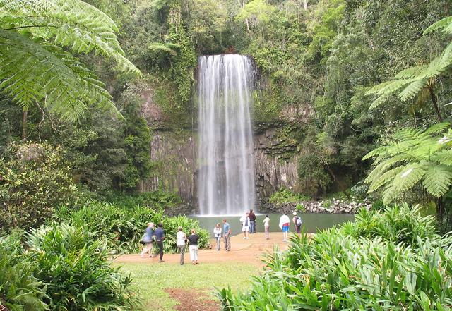 アサートン高原と熱帯雨林、滝めぐり1日ツアー