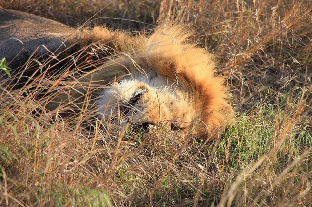 ケニア3泊4日-マサイマラ国立保護区&ナクル湖国立公園