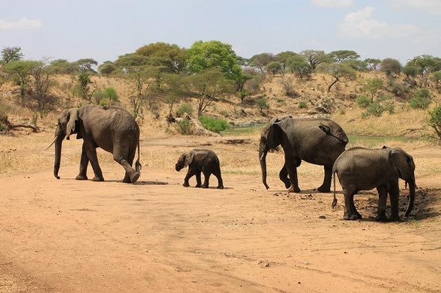 ケニア&タンザニアの世界遺産・国立公園6泊7日縦断の旅-マサイマラ国立保護区・ナクル湖国立公園・セレンゲティ国立公園・ンゴロンゴロ自然保護区