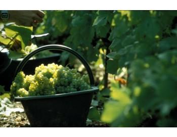 ランスとシャンパーニュ地方1日観光 世界有数のワインの産地を訪れる!!