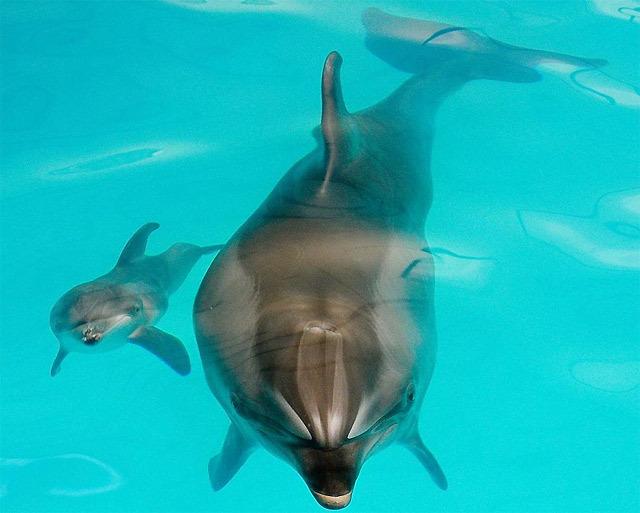 イルカ&アザラシのショー(イルカ水族館)