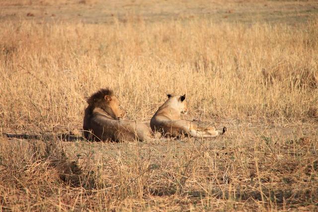動物の楽園タンザニアプライベートサファリ4泊5日の旅-マニヤラ湖・セレンゲティ・ンゴロンゴロ (キリマンジャロ空港送迎可)