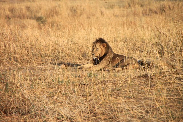 動物の楽園タンザニアプライベートサファリ5泊6日の旅-マニヤラ湖・セレンゲティ・ンゴロンゴロ・タランギーレ(キリマンジャロ空港送迎可)