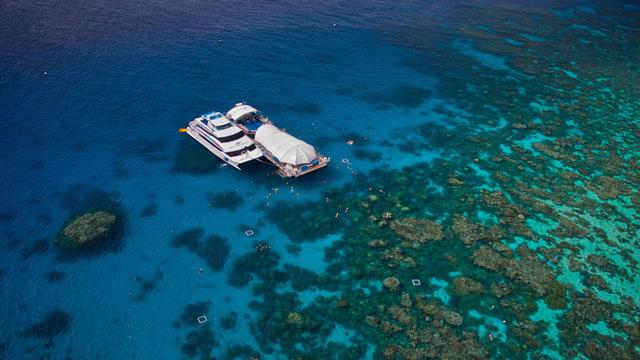アウターリーフ直行ツアー 世界一の珊瑚礁とトロピカルフィッシュを満喫!