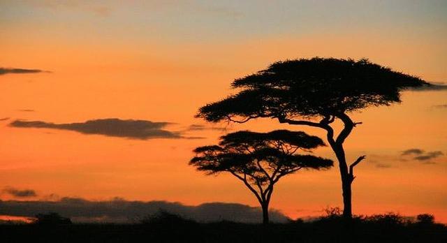 キリマンジャロ空港往復送迎付き! タンザニアサファリ3泊4日の旅
