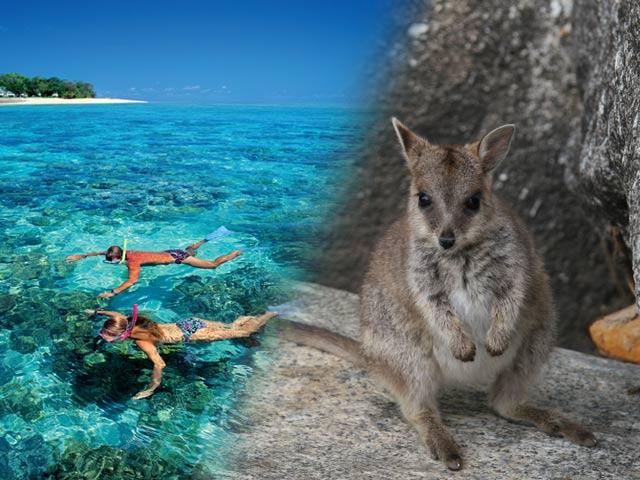 どきどき!グリーン島と動物探検1日ツアー(エコツーリズムオーストラリア認定ツアー!)