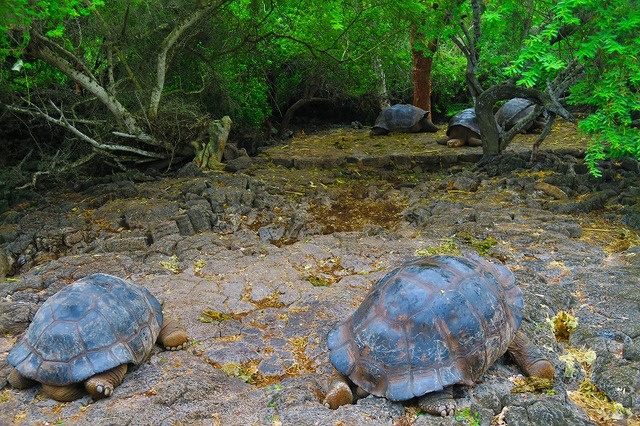 3 Island Hopping, Galapagos land package 5 days 4 nights