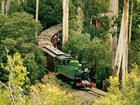 森の中を走る蒸気機関車(パッフィンビリー)