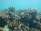 海の中は元気な珊瑚や魚がたくさん
