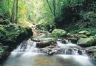 森林を流れる清流