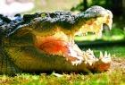 オーストラリアのアイコンのひとつ、クロコダイル!