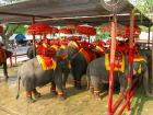 アジア象に乗ってみよう!