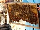 ハチミツ農園にて。