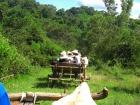 タイの田舎で牛舎に揺られる