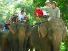 タイの象乗り体験。頭に乗れたらラッキー!?