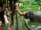 やっぱりかわいい象さん