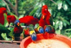 広大な敷地を擁する鳥達の楽園