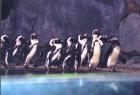 常夏のペンギン達