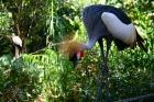 珍しい鳥達もたくさん