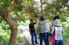 ホーチミンの強烈な太陽を遮る木陰で散策を