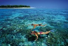 世界遺産グリーン島の輝く海でシュノーケリング